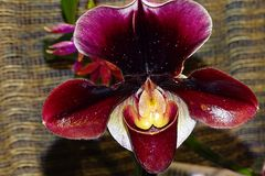 Orchidww-27