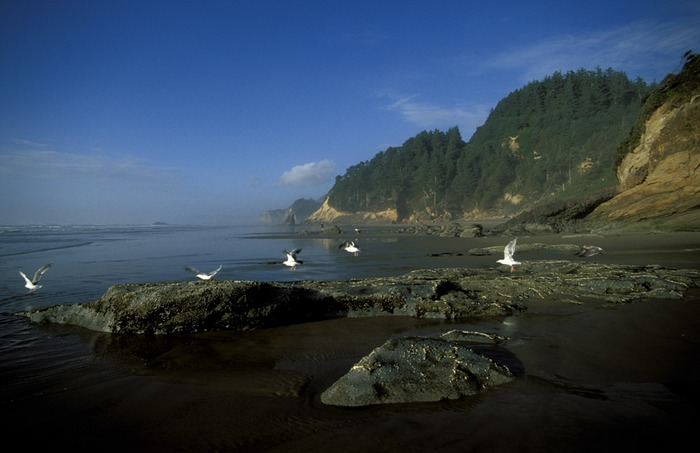 Oregon 08