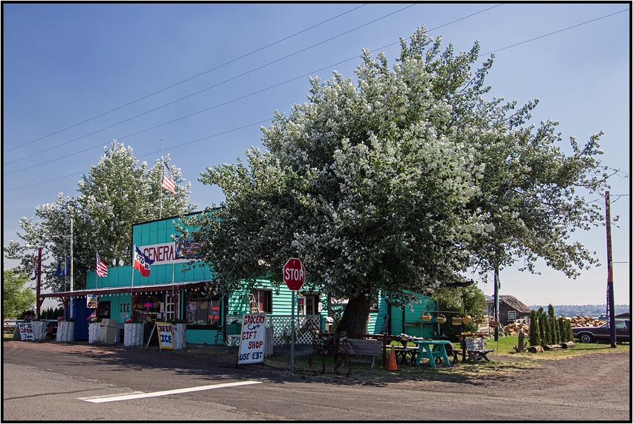 Oregon | roots |