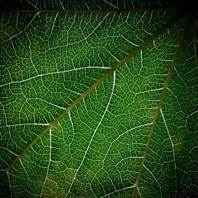 organic lines