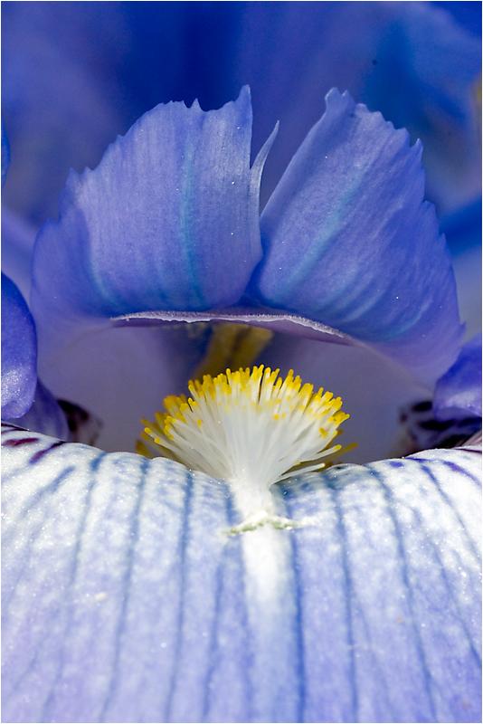 Orgie in blau