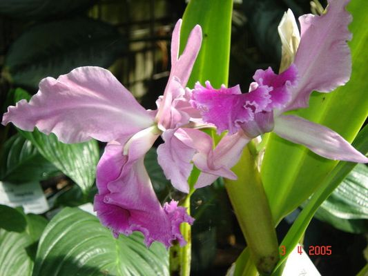 Orhideen