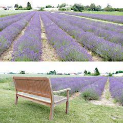 Originale Lavendelfelder Salzkotten