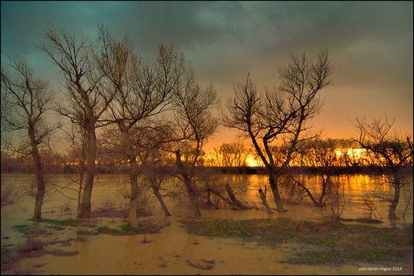 Orillas del Ebro. 5