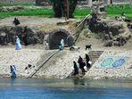 Orillas del Nilo. 3
