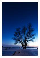 Orion & der Baum