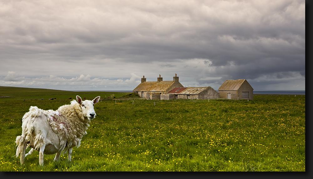 Orkney Inseln - Schottland