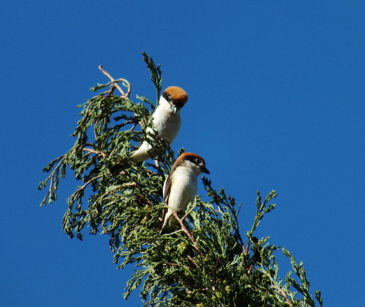 Ornithologen zur Bestimmung gebeten