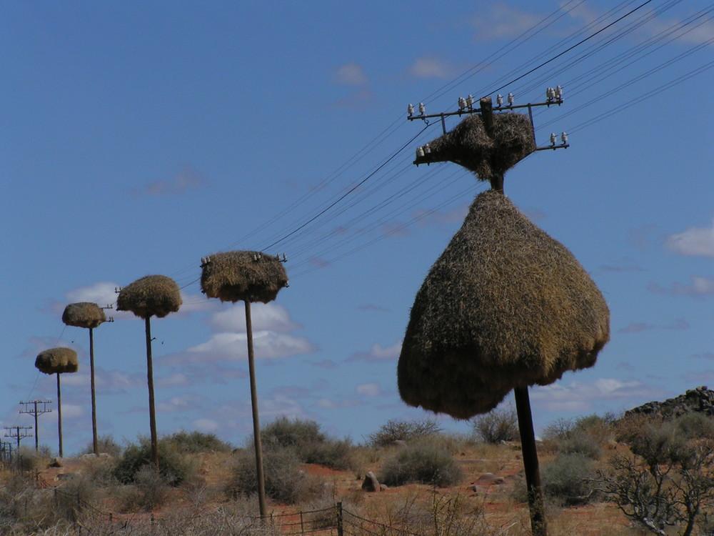 Ornithologische Wolkenkratzer