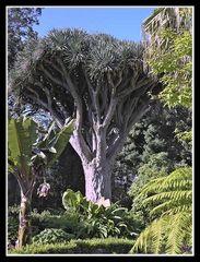 Orotava - Kanarische Flora