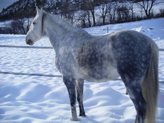 Orpheo et la neige