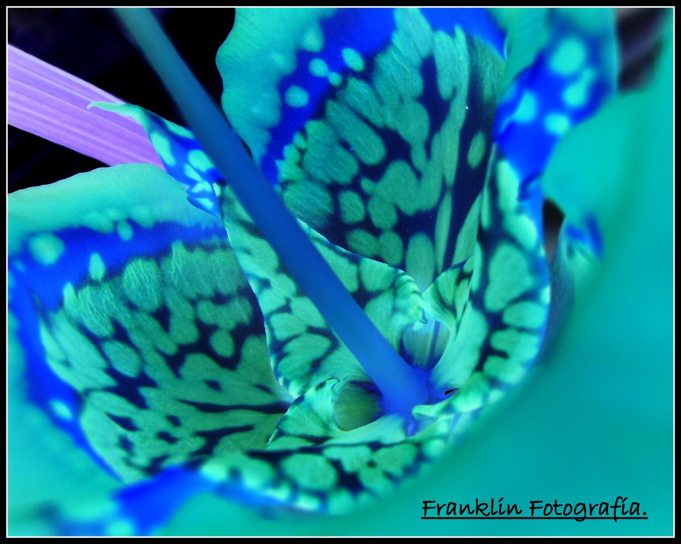 Orquídea Avatar.