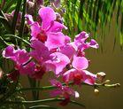 Orquídeas a contra luz