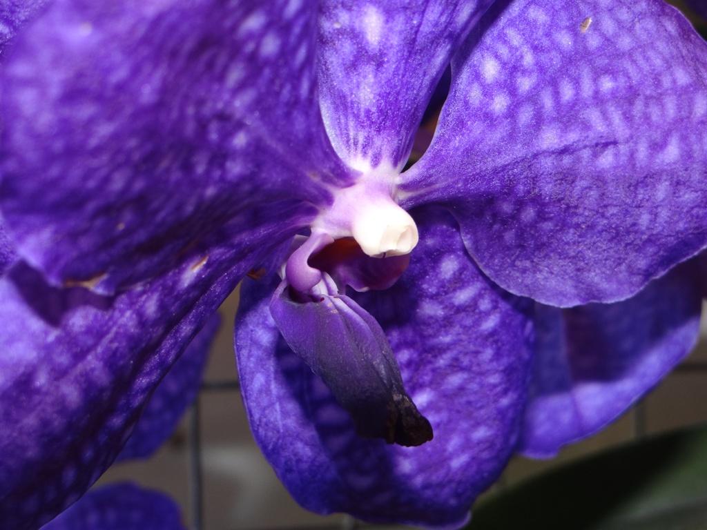 Orquídeas de Invierno 2012