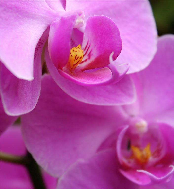 Orquídeasss