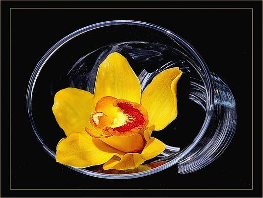 Orquidee im Glas