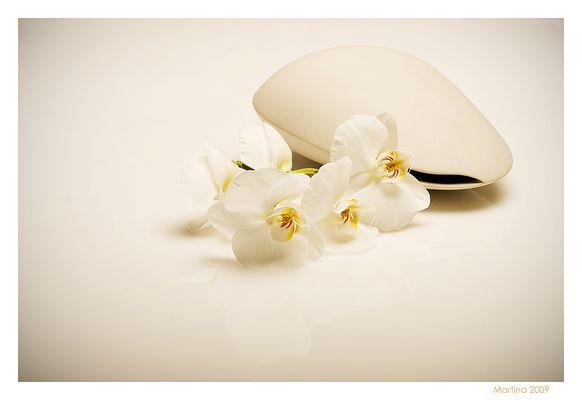 Orquídia blanca
