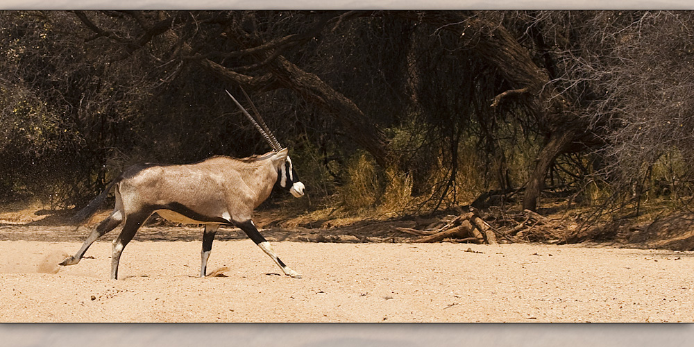 oryx 2