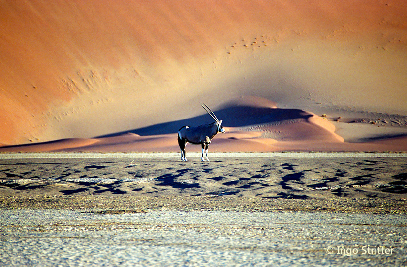 Oryxantilope im Sossusvlei, Namibia