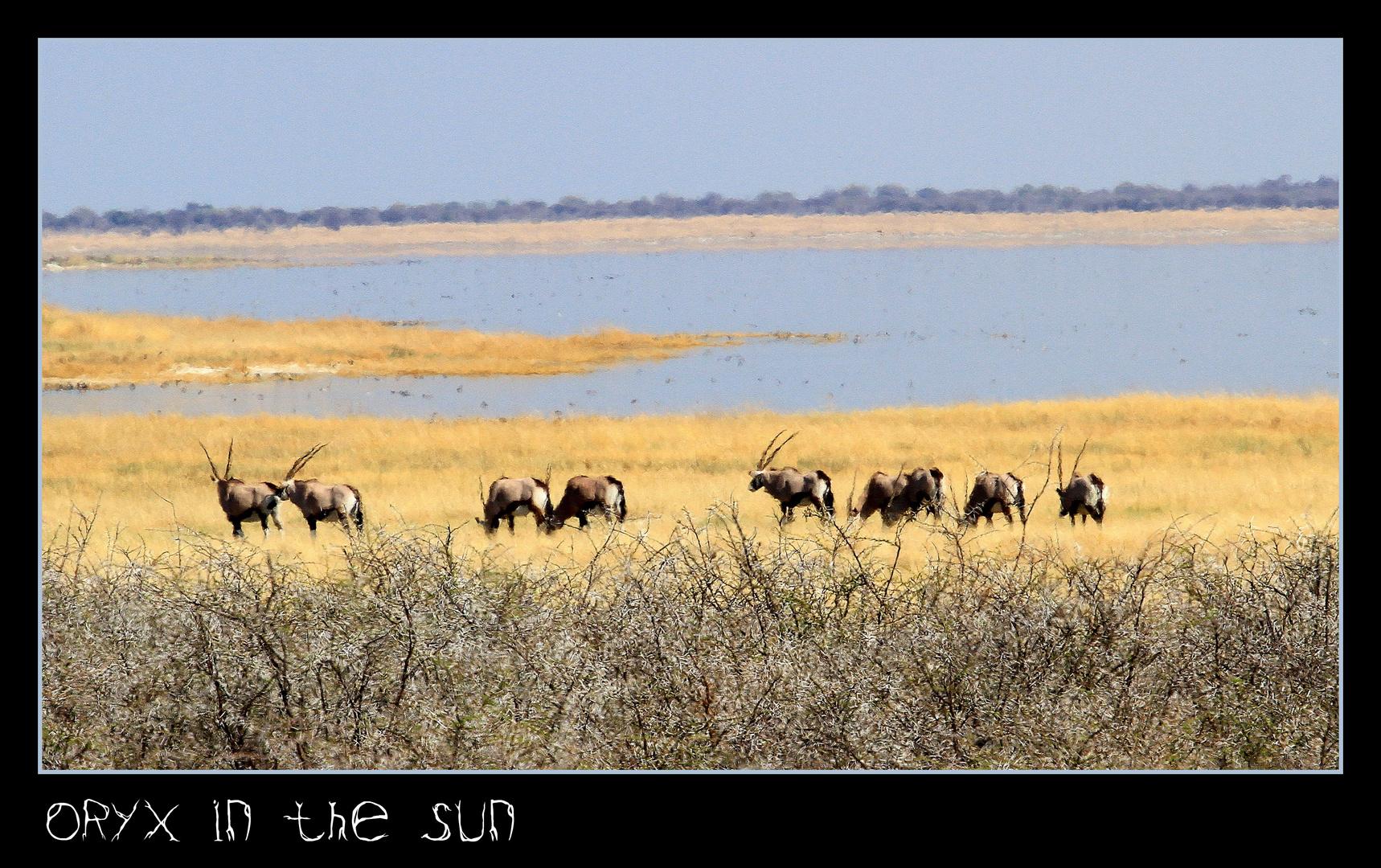 Oryxantilopen in der Mittagshitze