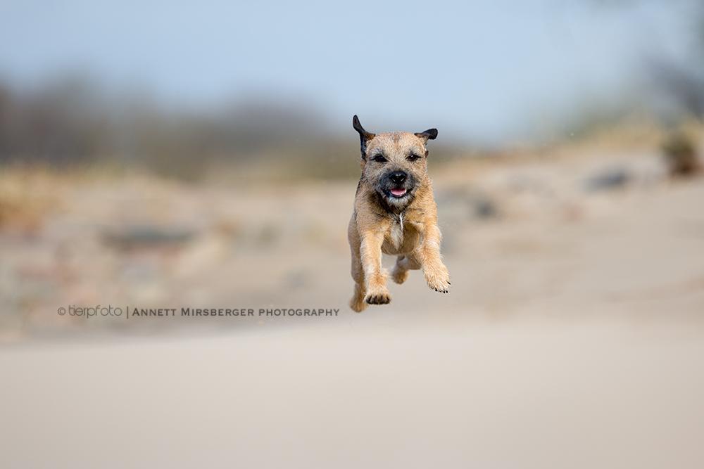 Oscar fliegt ins Wochenende...