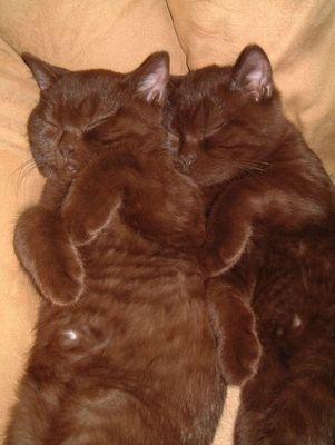 Oscar und Felix