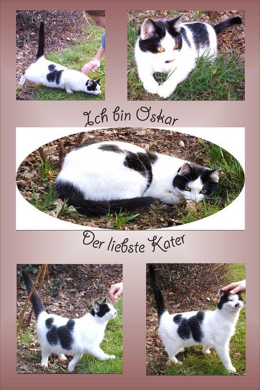 Oskar, der liebste Kater