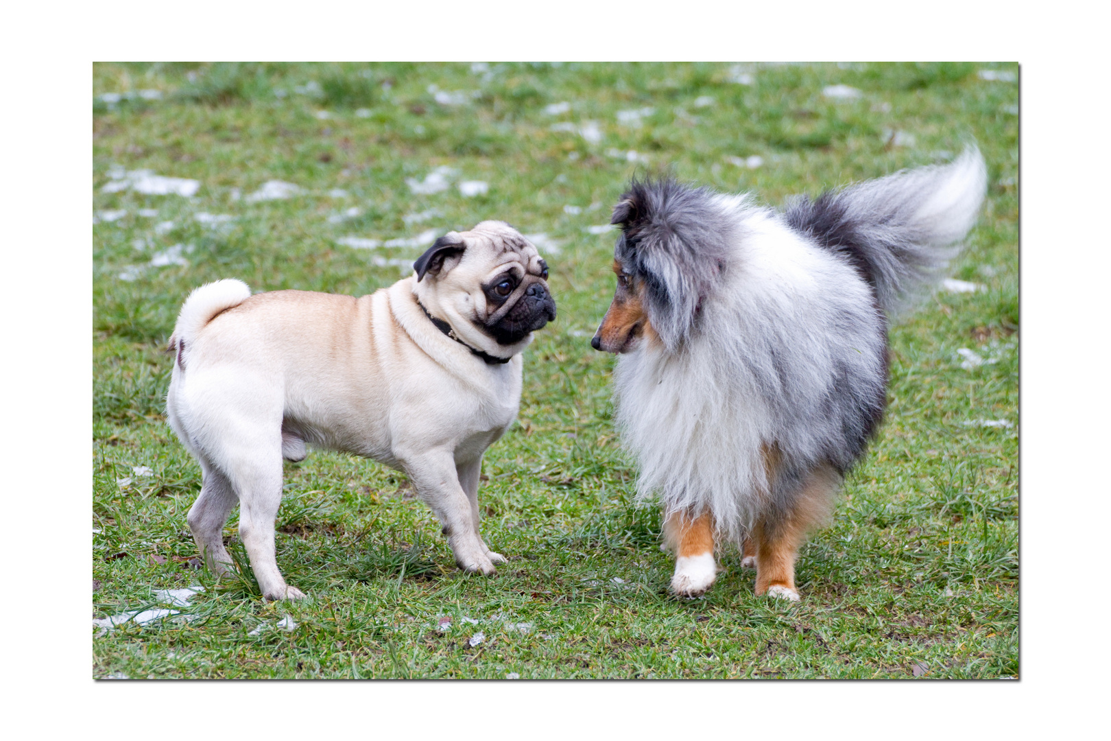 Oskar und Merlin