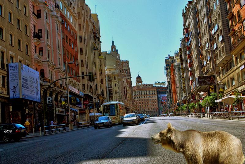 Oso en Paro busca Madroño economico