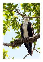 [ Osprey ]