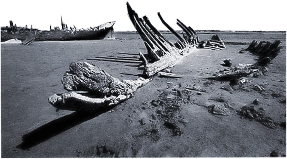 Ossa di mare