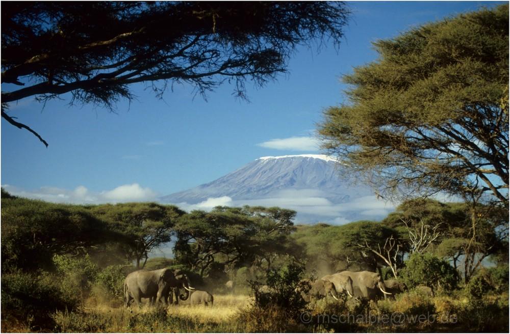 Ostafrika - Kenya - Amboseli - Kilimanjaro - Elefanten