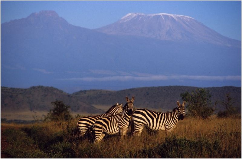 Ostafrika, Kenya, Tsavo West Nationalpark, Zebra, Kilimanjaro