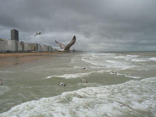 Ostende à tire d'aile
