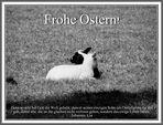 Oster-Lamm
