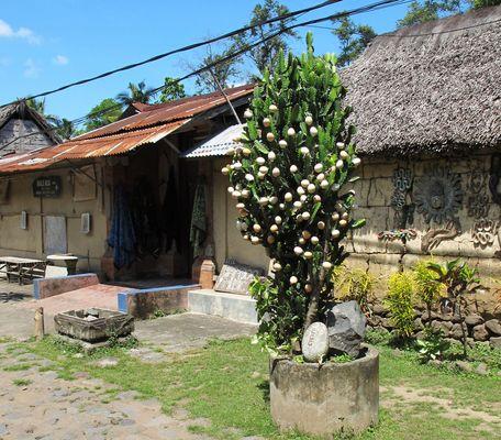 Osterbaum in Tenganan auf Bali