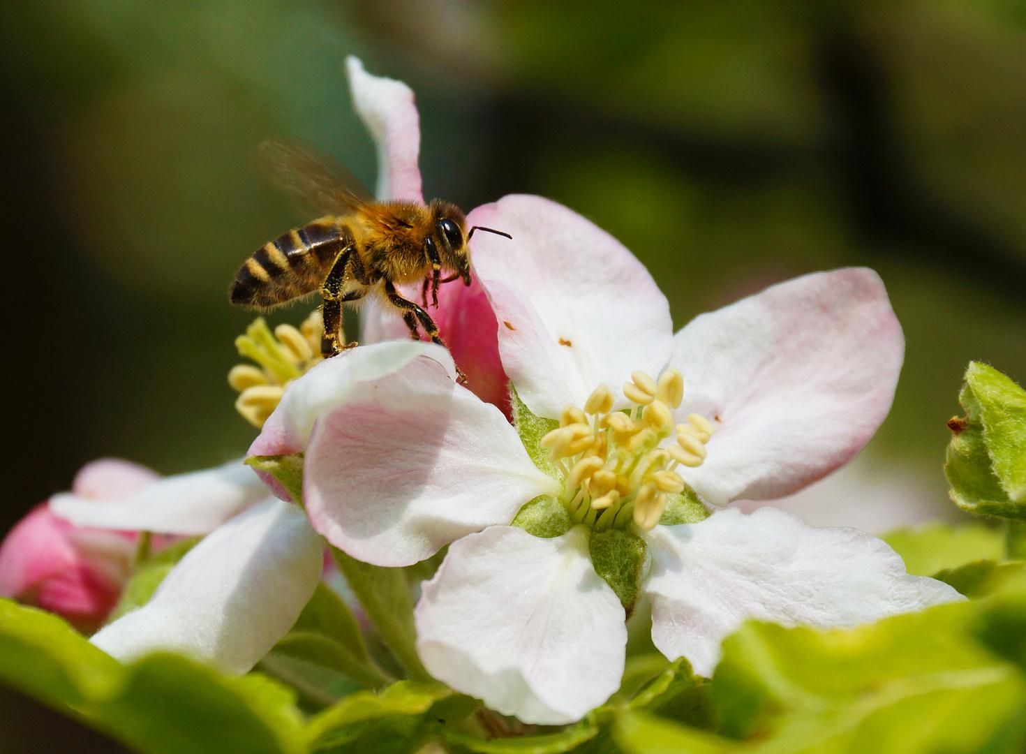 Osterbesuch im Apfelbaum