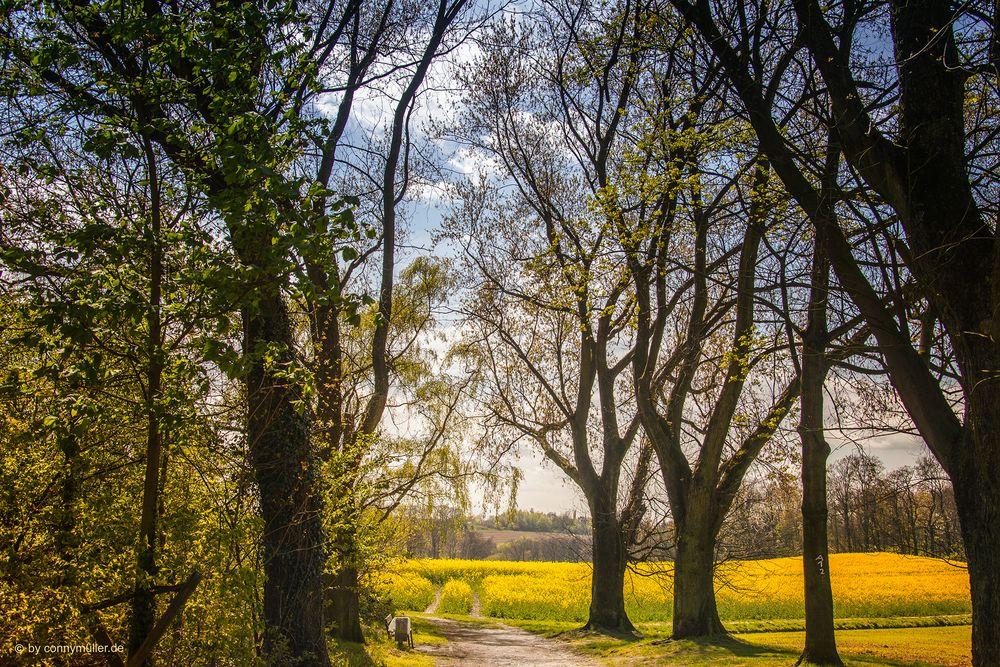 Osterfeldweg