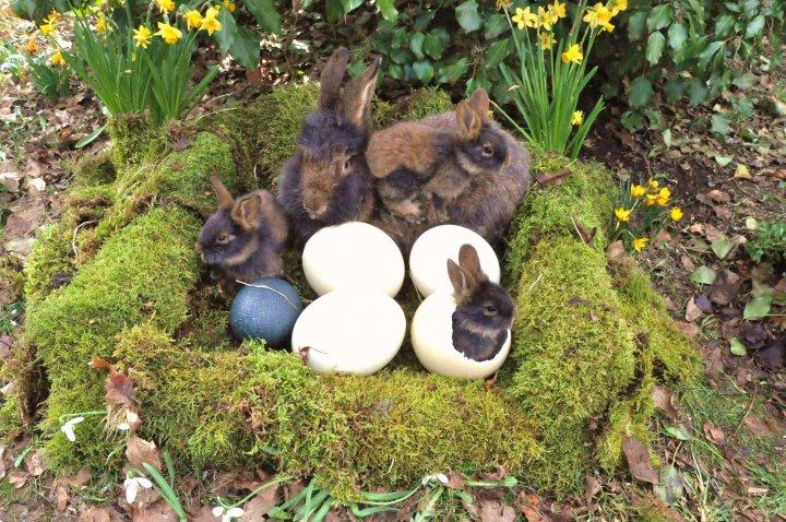 osterhasen nest foto bild ostern hase natur bilder auf fotocommunity. Black Bedroom Furniture Sets. Home Design Ideas