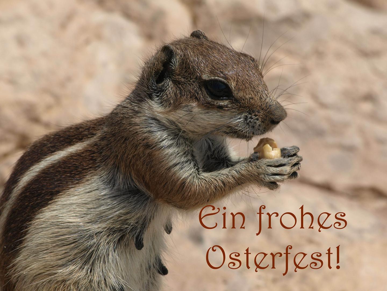 Osterhasi?