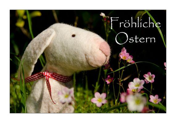 Osterhasi gesichtet...