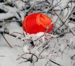 """""""Osterhasi"""" übt schon mal in klirrender Kälte!!!!"""