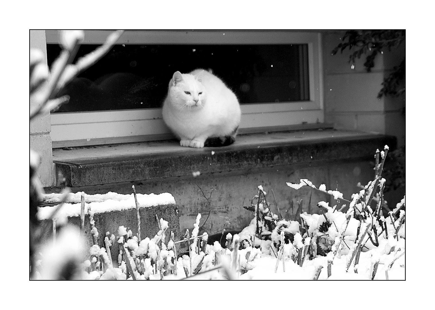 Oster....Katze
