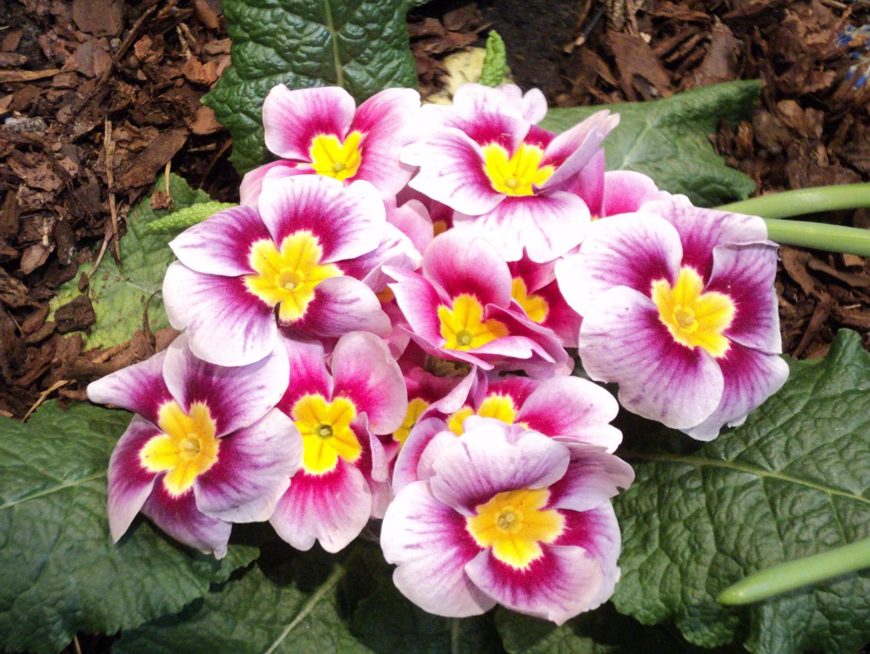 Ostern 2012 Frühlingsgrüsse