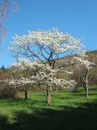 Ostern bei Dernbach