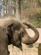 ostern im Zoo Hannover