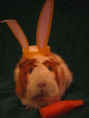 Ostern schon vorbei?