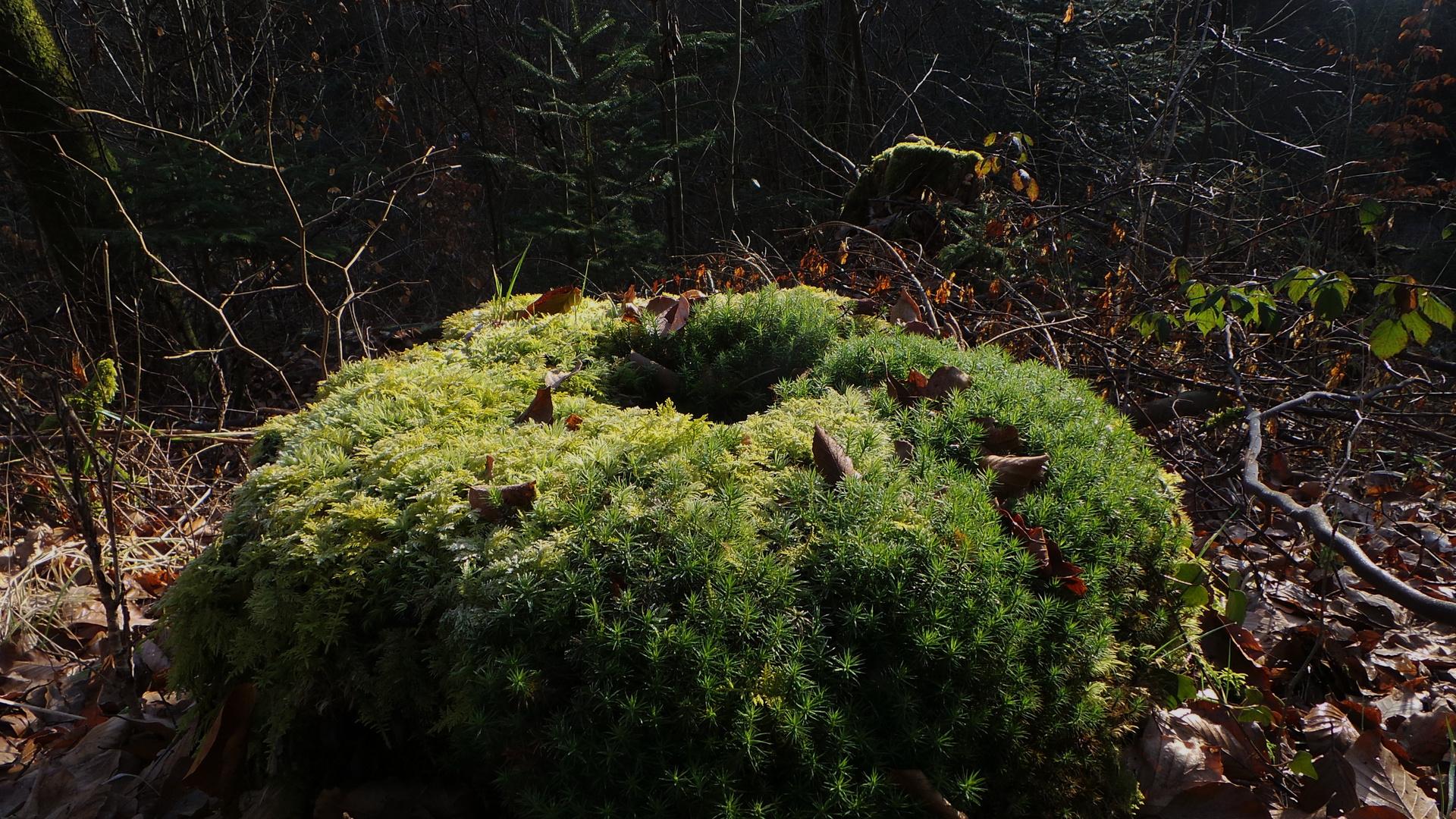 osternest 2014 ebbes bälder im wald gefunden