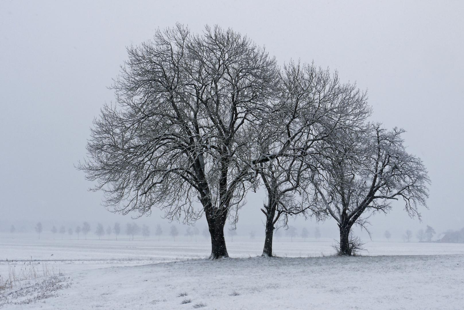 Ostersonntag ,3 Grad minus, leichter Schneefall , 9.30 Uhr