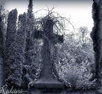 Ostfriedhof Aachen #02